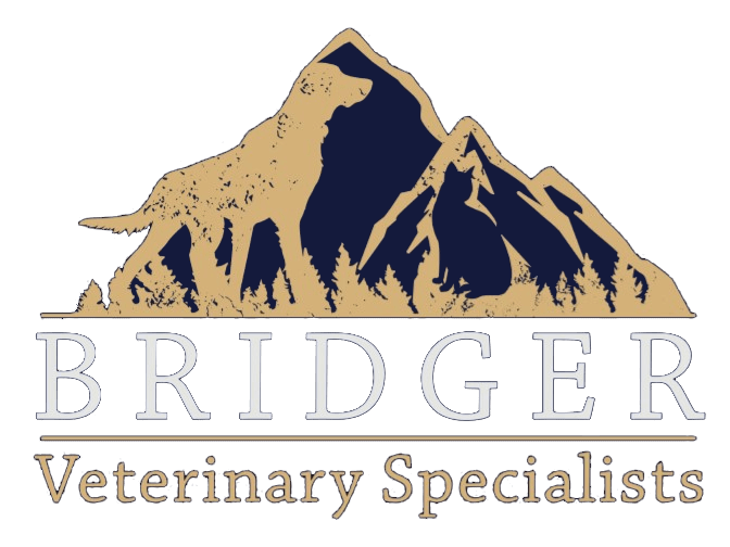 Bridger Veterinary Specialists
